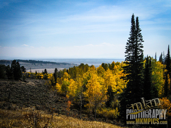 Grizzly Helena trail 023