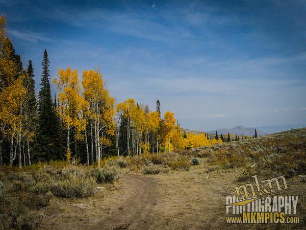 Grizzly Helena trail 060
