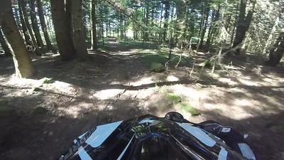 Dans la Forêt 2