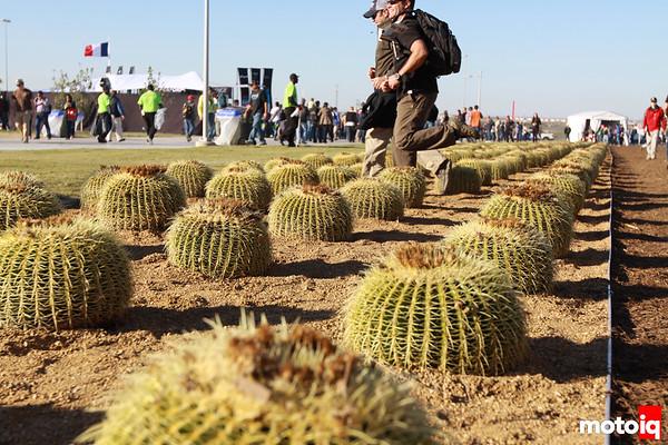 United States Grand Prix ground thorns bushes