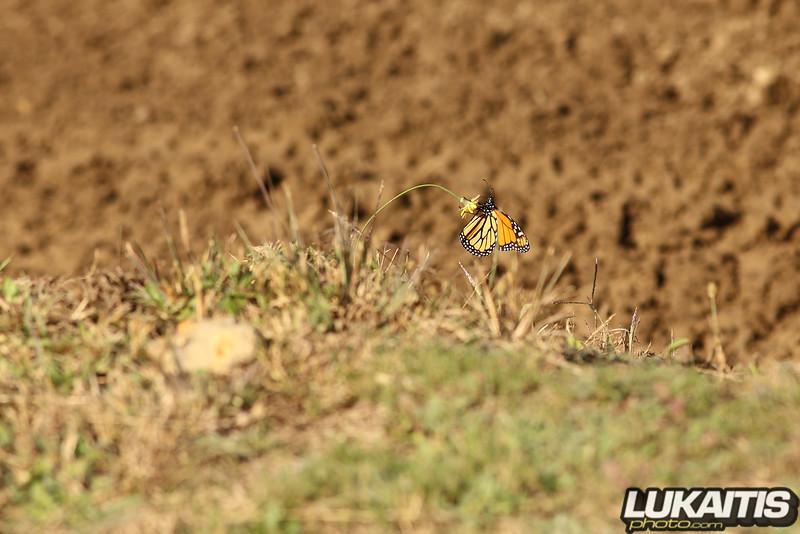 butterfly_rpmx_102217_193