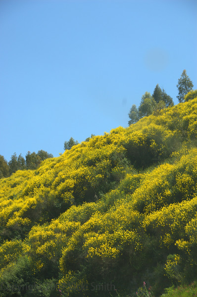 Wildflowers. Whole hillsides of them were everywhere