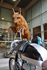 """That's the Bull at the entrance to the hotel, and Gabriel's Bultaco, saying """"hi"""""""