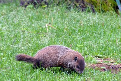 CGV Groundhog 02