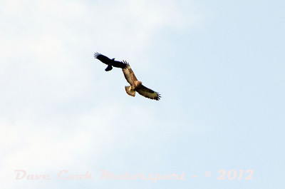 We were entertained by the Buzzard being mobbed by a crow while waiting for the Class 0 cars to arrive at Moneystones