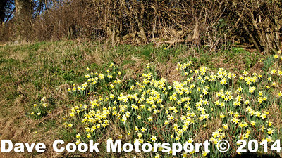 DSCF3263: The daffodils have arrived for the Spring Trial