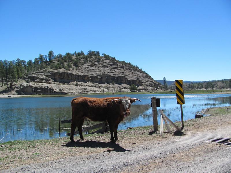 New Mexico Road Hazzard....