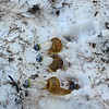 Beer cooler....Snow!