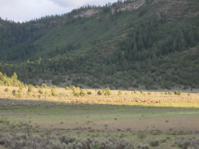 Huge Heard of Elk.... out in the boonies in NM.