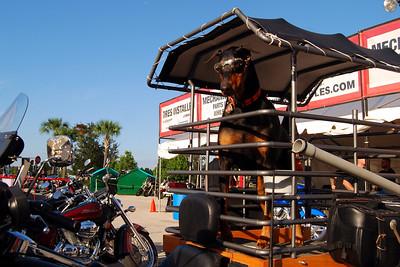 0982 2012 Biketoberfest