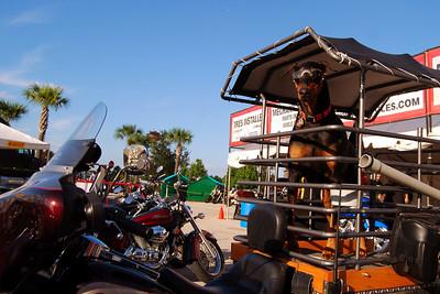 0980 2012 Biketoberfest