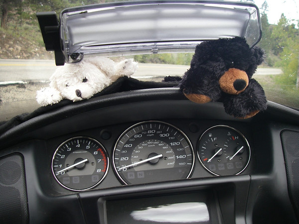 The two bears that now travel with us