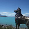 A monument to all the sheep dogs of NZ