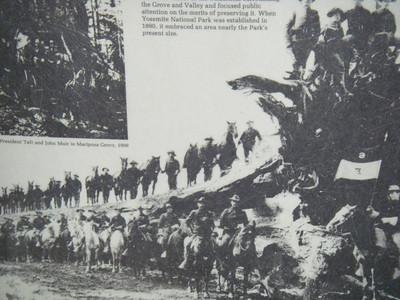 Mariposa Grove - 1909 (same tree)