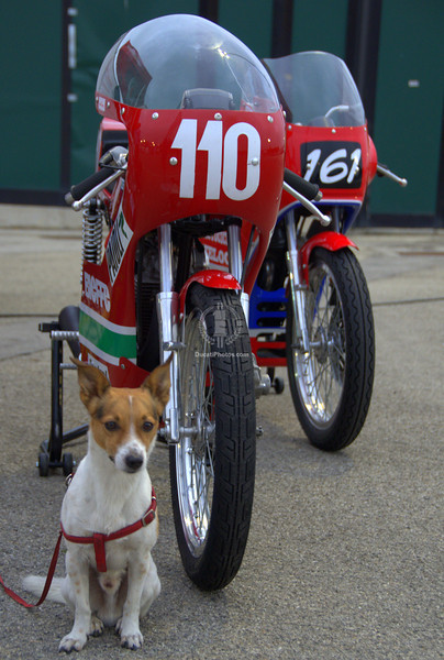 Misano is dog friendly, yet another reason to love it