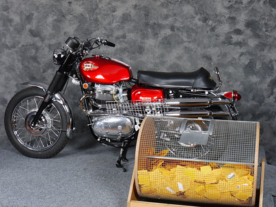 The raffle bike - a $1 ticket will win this 1969 BSA Firebird Scrambler in just a few minutes...
