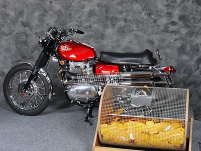 The raffle bike - a $1 ticket will win this 1969 BSA Firebird Scrambler in just a few minutes...