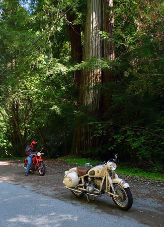 Redwood Forest / Alpine Road