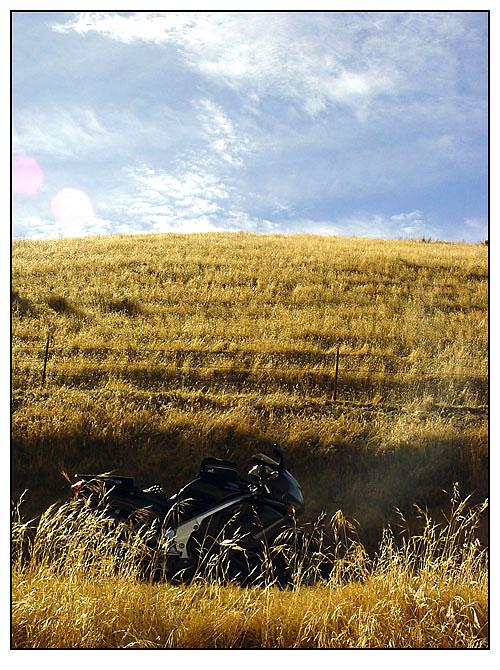 VFR hidden in the weeds.