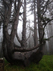 The Octopus Tree, near one of the lighthouses we visited.