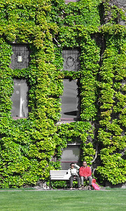 Victoria - Empress Hotel: Detail. The ivy is winning!