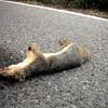 Road Kill US style