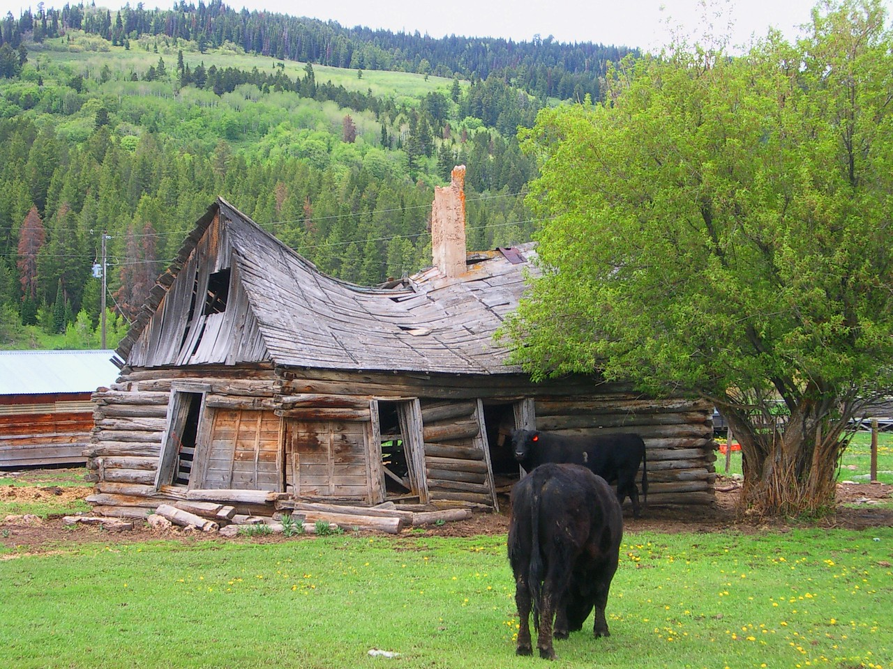 Idaho fixer-upper that the cows seemed to quite like. <br /> <br /> I thought it had a certain charm to it too.
