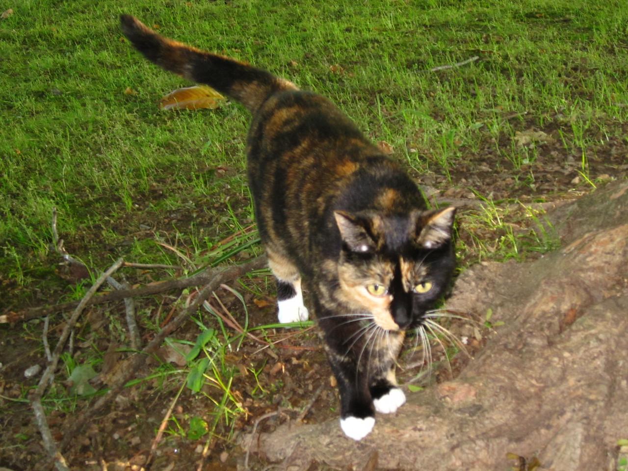 Miss Kitty, eminent ruler of the Elm residence.