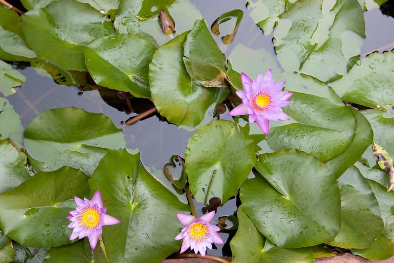 pond at Victoria Hotel