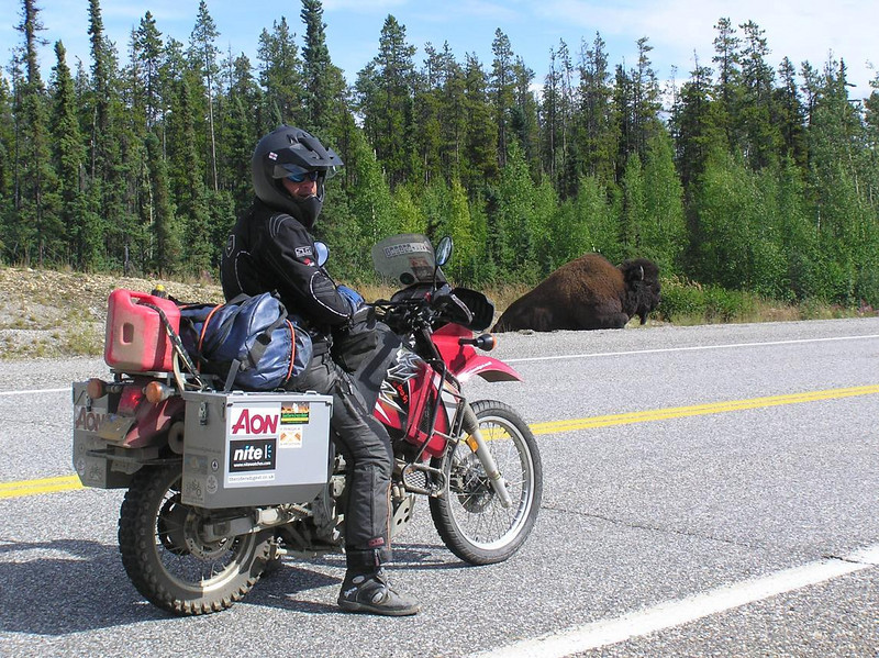 Simon checks out his first Bison in North America near Coal River, British Columbia - CO2AK08