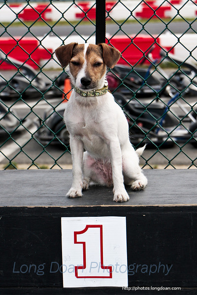 Michael Neely's Jack Russel Terrier