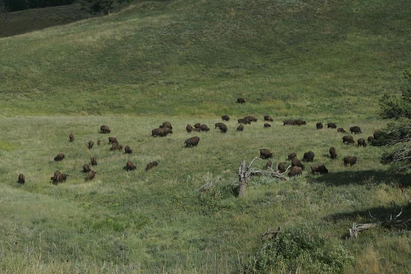 Custer State Park, South Dakota