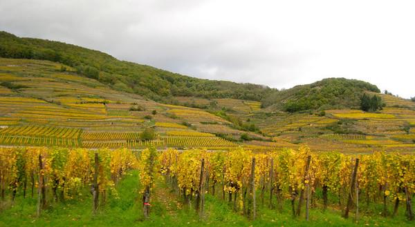 (2013) Alsace