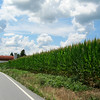 Tall corn, on both sides of the road. Not much of a view at that point.