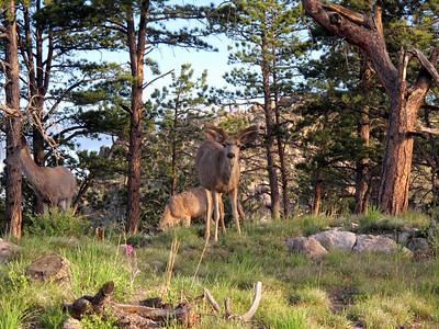 More deer.