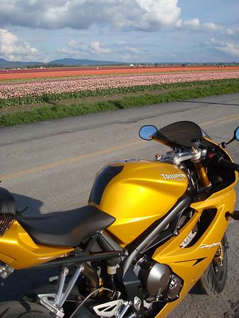 04-20-08 - Tulip Festival Ride
