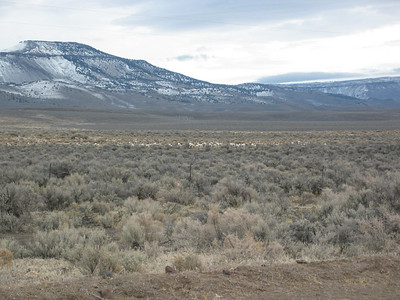 A herd of about 200 to 300 antelope. Zoom in for a better view.