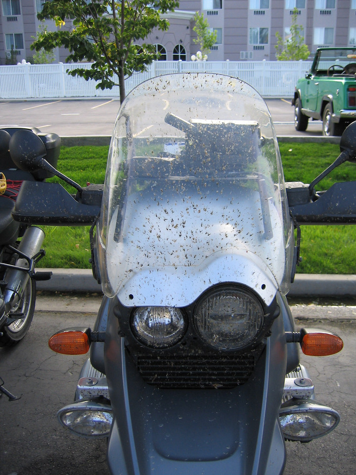 In life, your either the windshield or the bug