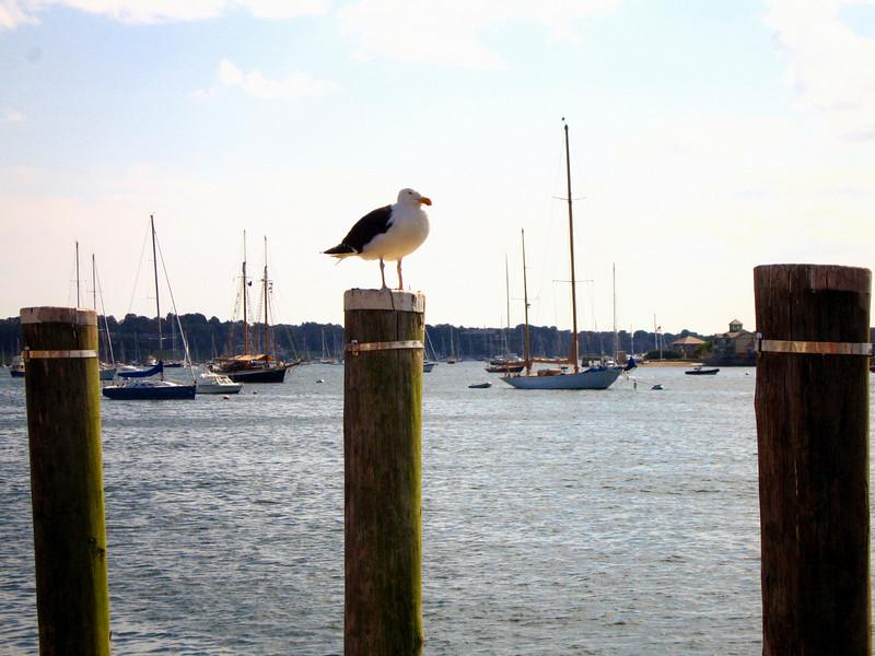 "Newport, RI <a href=""http://www.advrider.com/forums/showthread.php?t=217444"">http://www.advrider.com/forums/showthread.php?t=217444</a>"