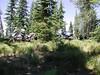 Bikes hiding in the bear grass