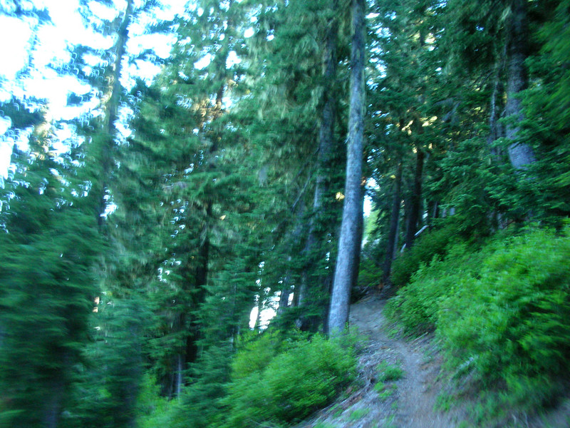 See the elk on the trail? Yeah the fuzzy brown dot. Not bad for a moving picture while trying not to ride off the edge.