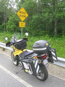 Lots of MOOSE CROSSING signs, but no moose sightings.