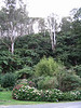 Garden and hill side full of the tree ferns
