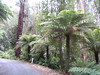 Take a gander at these tree ferns!