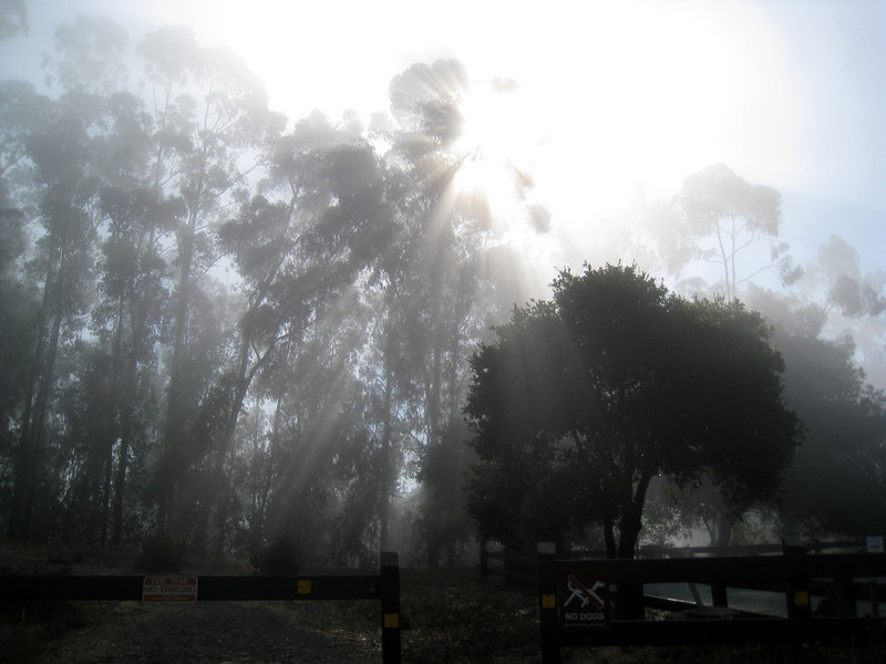 the sunlight trying it's damnedest to break through the morning fog.