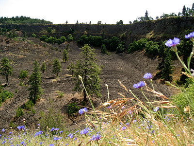 Wildflowers overlook the volcanic area.