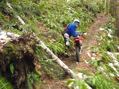 Bill looking back after clearing one of many trees