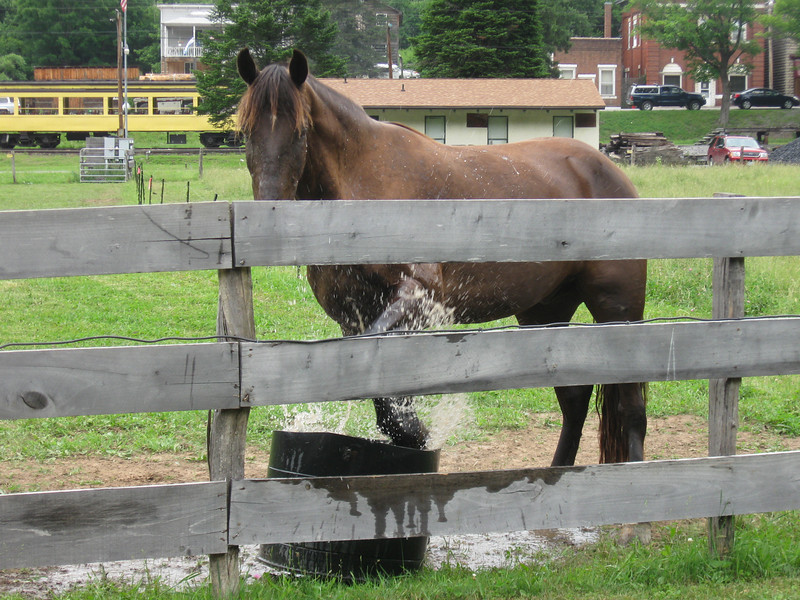 Hoof-washing station