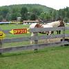 Caution:  Horse!