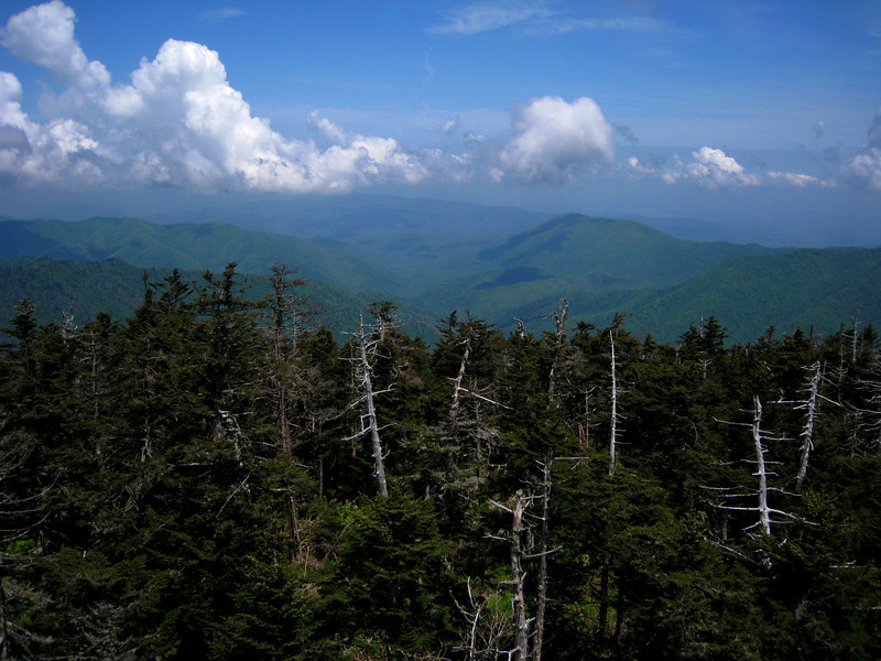 Top of Clingman's Dome, about 6500 feet - there's a nice observation tower.